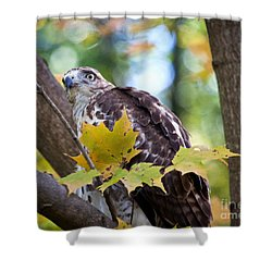 Shower Curtain featuring the photograph Red Tail Hawk Closeup by Eleanor Abramson