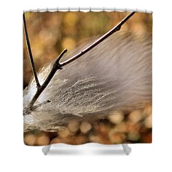 Red Tail Hawk Feather Shower Curtain by Kristin Elmquist