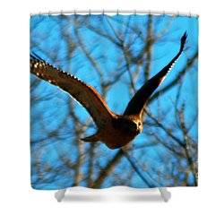 Shower Curtain featuring the photograph Red Tail Hawk In Flight by Peggy Franz