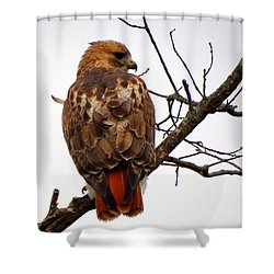 Red Tail Hawk In Winter Shower Curtain by Dianne Cowen