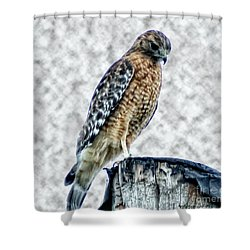 Red Tail Hawk Looking Down Shower Curtain