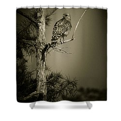 Red Tail Hawk On Loop Road Shower Curtain