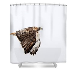 Red Tail In Flight Shower Curtain