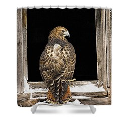Red Tail Shower Curtain by Jack Milchanowski