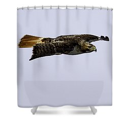 Red-tailed Hawk In Flight 2 Shower Curtain