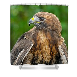 Red-tailed Hawk Close-up Shower Curtain