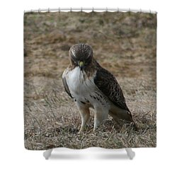 Shower Curtain featuring the photograph Red Tailed Hawk by Neal Eslinger