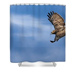 Red Tailed Hawk Soaring Shower Curtain
