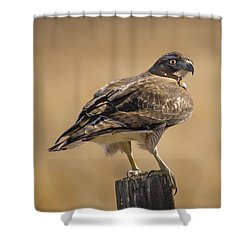 Shower Curtain featuring the photograph Red Tailed Hawk Watching by Janis Knight