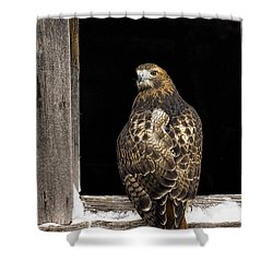 Red Tailed Shower Curtain by Jack Milchanowski