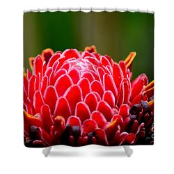 Red Torch Ginger Flower Head From Tropics Singapore Shower Curtain by Imran Ahmed