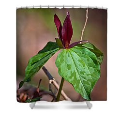 Red Trillium Shower Curtain by Melinda Fawver