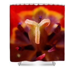 Red Tulip Abstract Shower Curtain by Rona Black