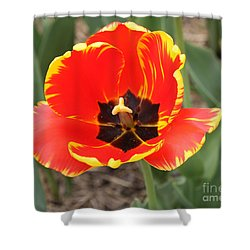 Red Tulip At Brooklyn Botanical Gardens Shower Curtain by John Telfer