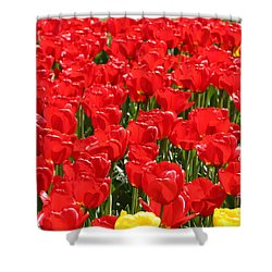 Red Tulip Field Shower Curtain by Tap On Photo