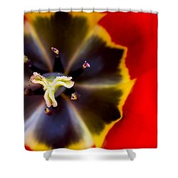 Red Tulip Macro Shower Curtain by Adam Romanowicz