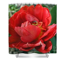 Shower Curtain featuring the photograph Red Tulip by Vesna Martinjak