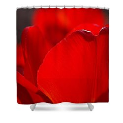 Petal's Edge Shower Curtain