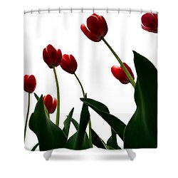 Red Tulips From The Bottom Up Vl Shower Curtain by Michelle Calkins