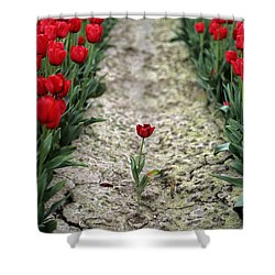 Red Tulips Shower Curtain by Jim Corwin