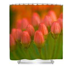 Red Tulips Shower Curtain by Sebastian Musial