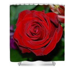 Red Velvet Rose Shower Curtain by Connie Fox