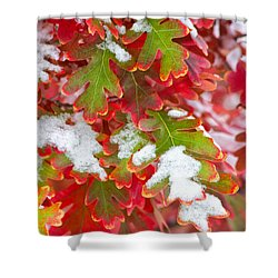 Shower Curtain featuring the photograph Red White And Green by Ronda Kimbrow