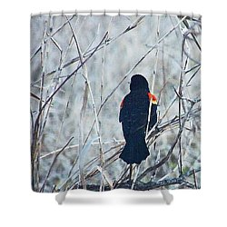 Shower Curtain featuring the digital art Red Wing Perched by Lizi Beard-Ward