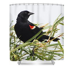 Red-winged Beauty Shower Curtain