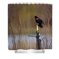 Red Winged Blackbird 2 Shower Curtain by Ernie Echols