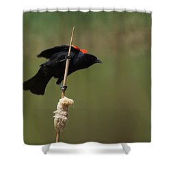 Red Winged Blackbird 3 Shower Curtain by Ernie Echols