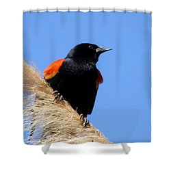Red-winged Blackbird Shower Curtain by Bob and Jan Shriner