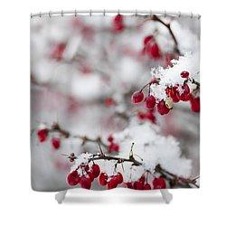 Red Winter Berries Under Snow Shower Curtain by Elena Elisseeva