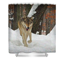 Shower Curtain featuring the digital art Red Wolf On A Winter Hunt by Lianne Schneider