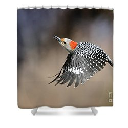 Redbelly Woodpecker Flight Shower Curtain