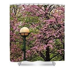 Redbud And Lamp Shower Curtain