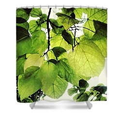 Catalpa Branch Shower Curtain