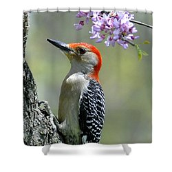 Redbud With Woodpecker Shower Curtain