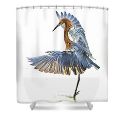 Reddish Egret 1 Shower Curtain by William Horden