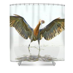 Reddish Egret 2 Shower Curtain by William Horden
