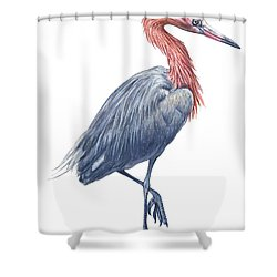 Reddish Egret Shower Curtain by Anonymous