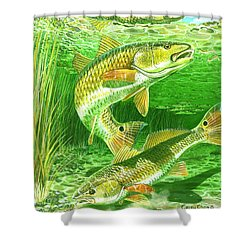 Redfish Haven In0018 Shower Curtain by Carey Chen