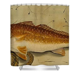 Redfish In The Boat Shower Curtain