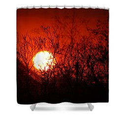 Redorange Sunset Shower Curtain by Matt Harang