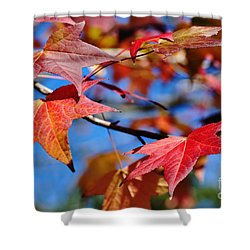 Reds Of Autumn Shower Curtain by Kaye Menner