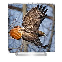 Redtail Hawk Square Shower Curtain
