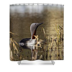 Redthroated Loon Shower Curtain