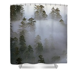 Redwood Creek Overlook With Giant Redwoods  Shower Curtain