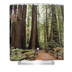 Redwood Trees Shower Curtain