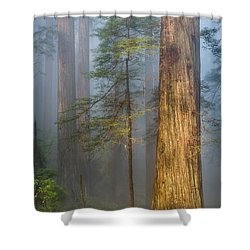 Redwoods In The Blue Mist Shower Curtain